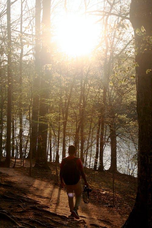açık, adam, ağaçlar, ahşap içeren Ücretsiz stok fotoğraf