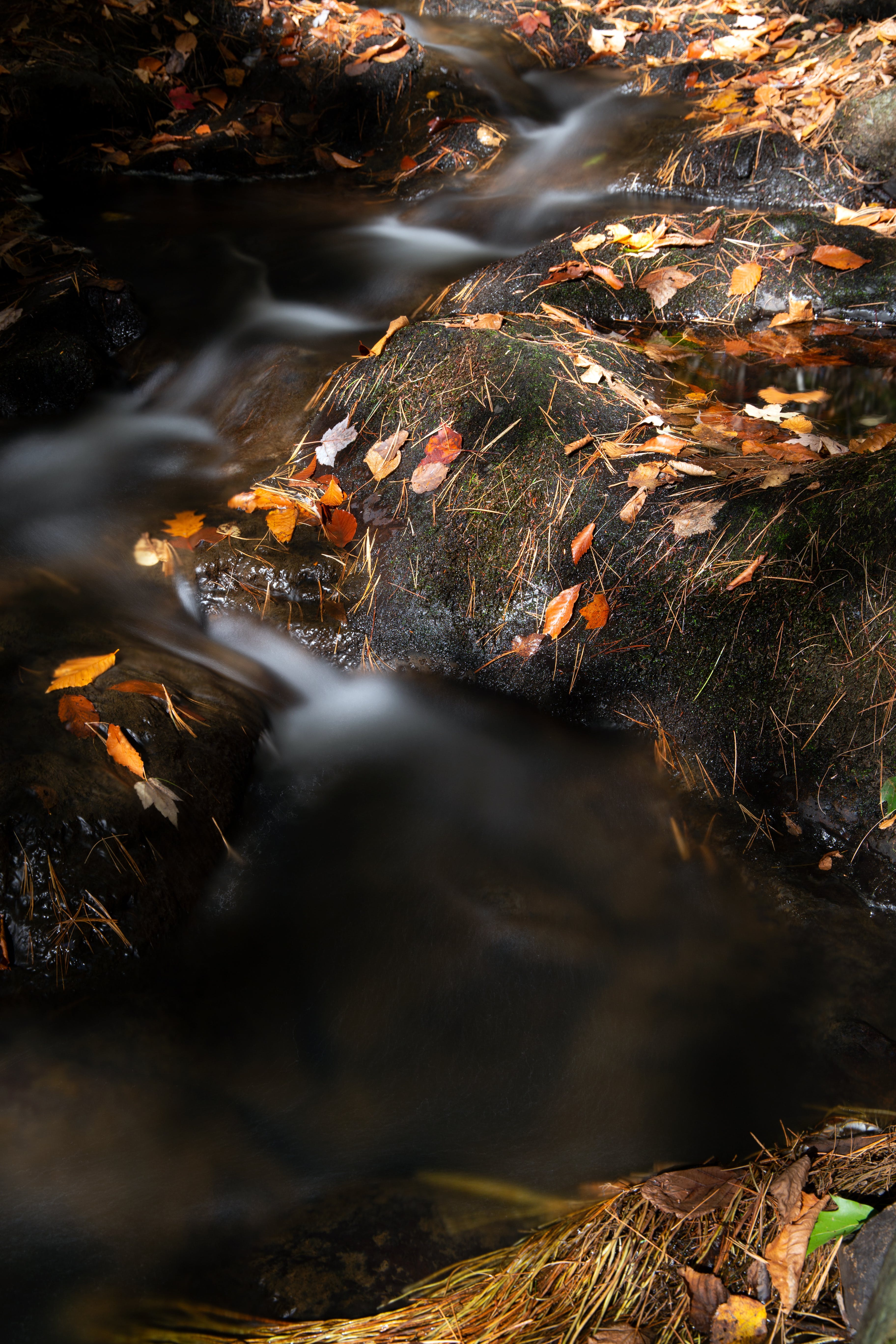 autumn, blur, creek