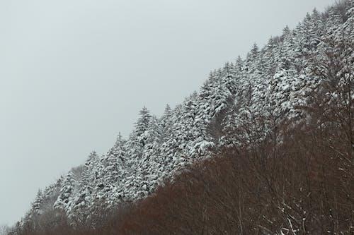 Gratis arkivbilde med årstid, daggry, forkjølelse, frosset