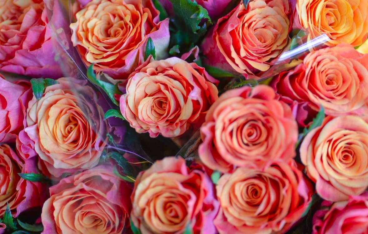 aniversario, bonito, botánico
