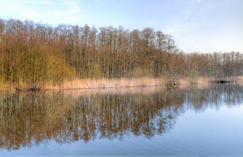 Imagine de stoc gratuită din anotimp, apă, arbori, codru