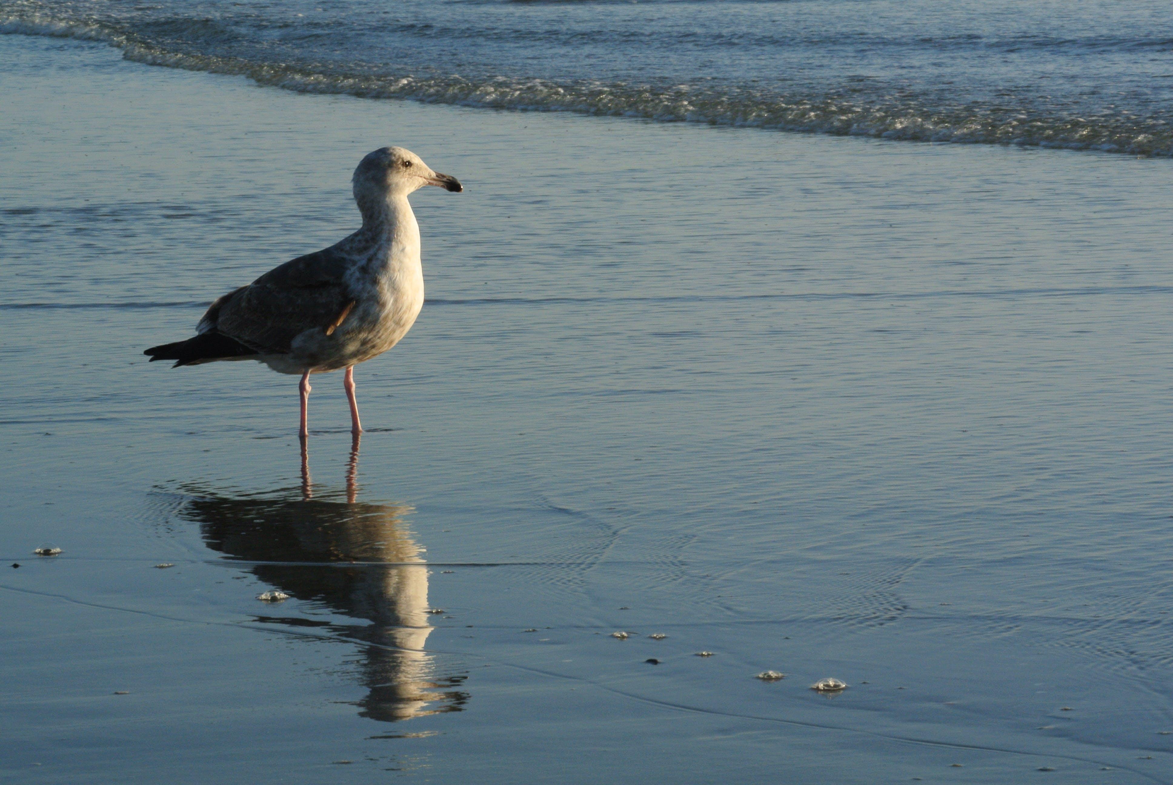 Free stock photo of bird, look, sea, seagull
