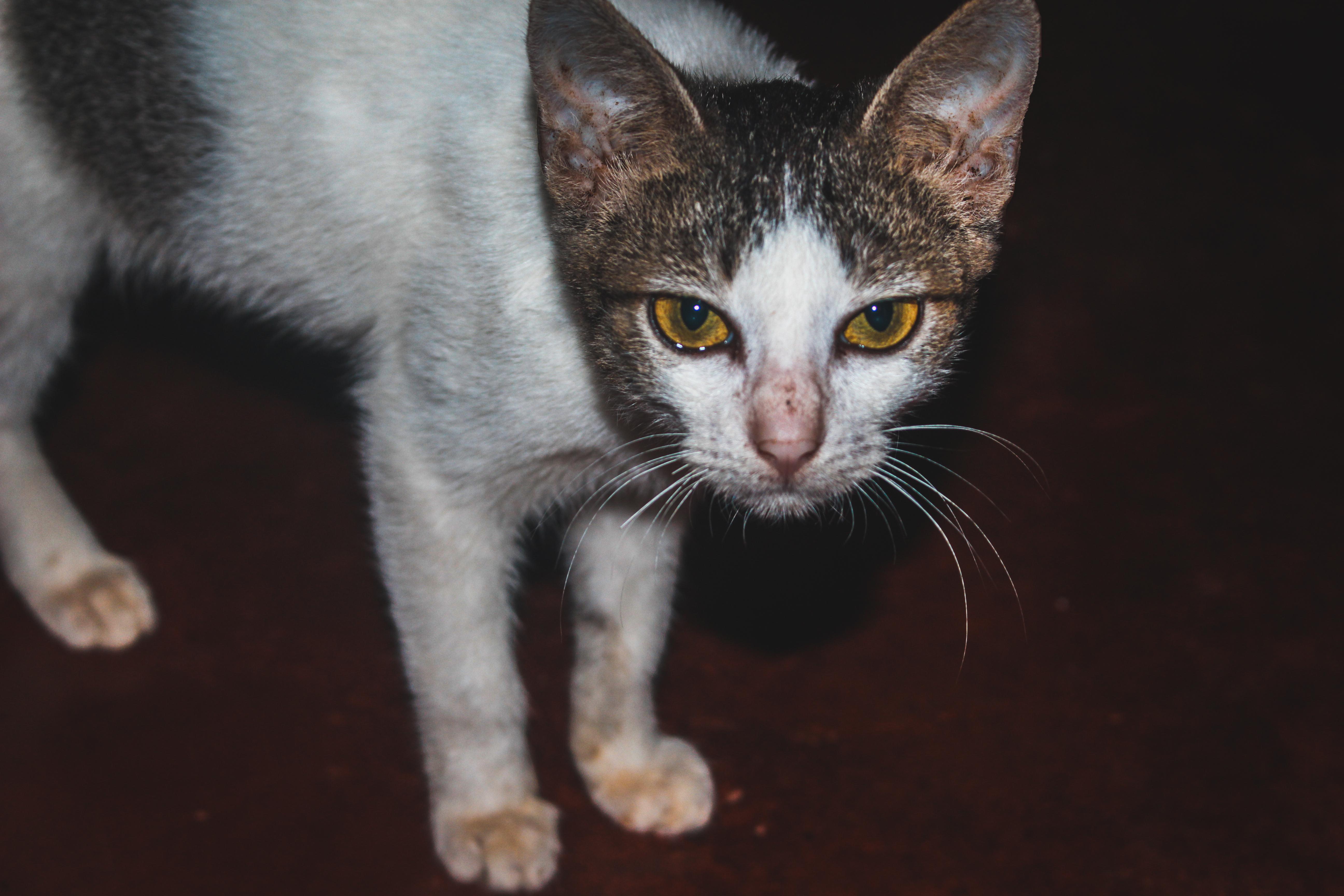 HD mačička pic