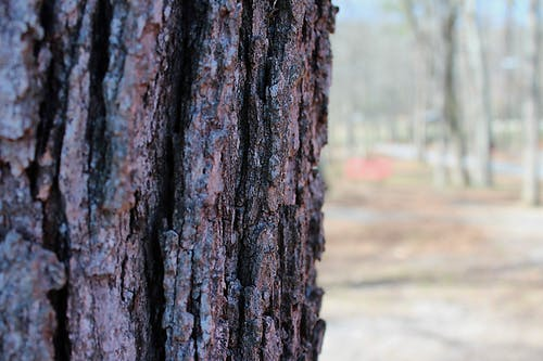 Free stock photo of bark, close-up view, tree
