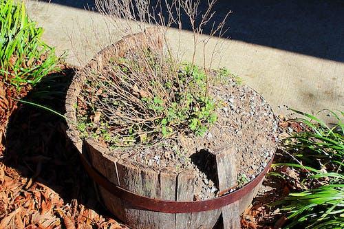 Free stock photo of barrel, broken, flower, rustic