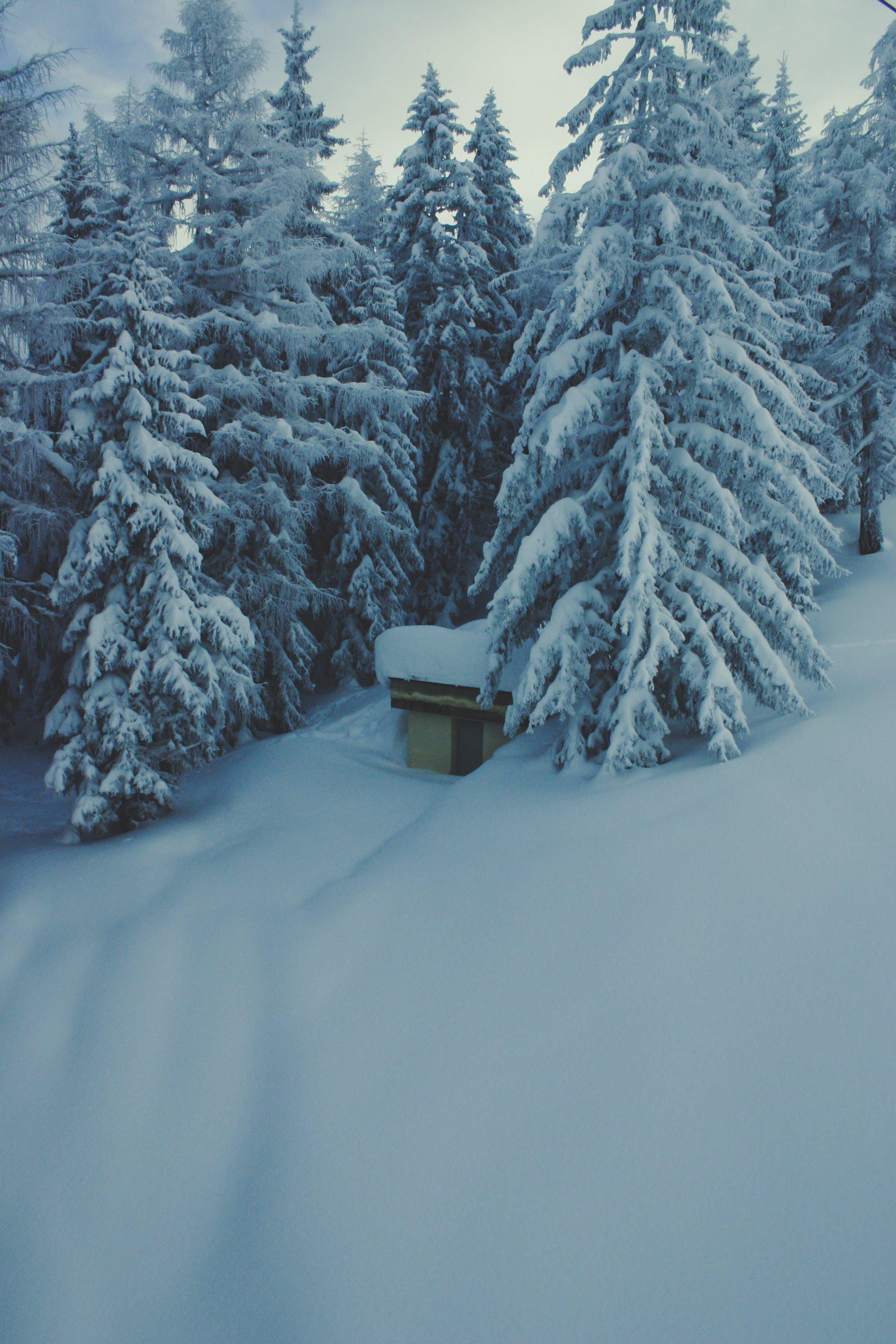 Ingyenes stockfotó fák, hideg, hó, tél témában
