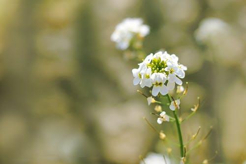 คลังภาพถ่ายฟรี ของ การเจริญเติบโต, กำลังบาน, ความชัดลึก, ดอกไม้