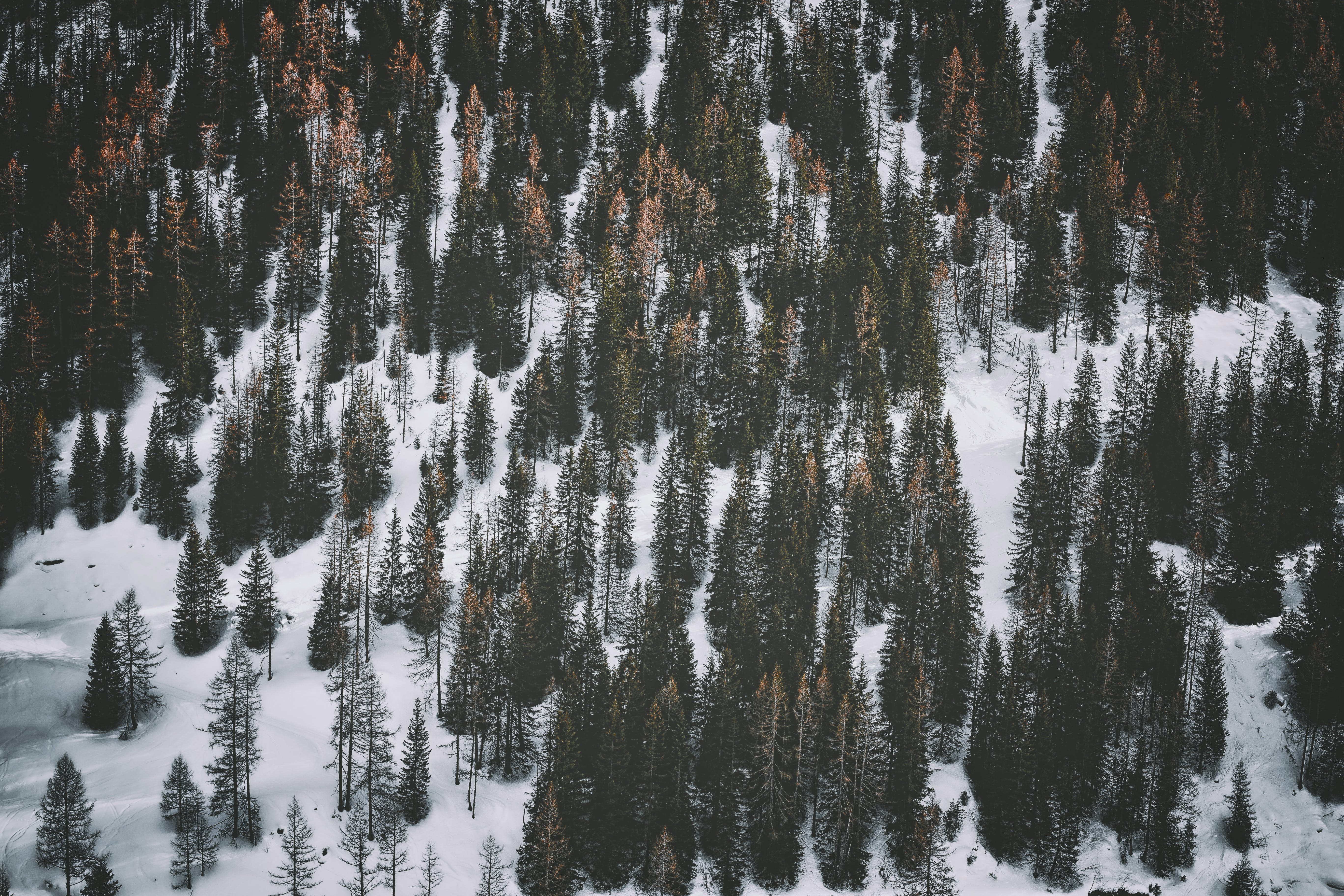 Snow Covered Ground With Pine Trees