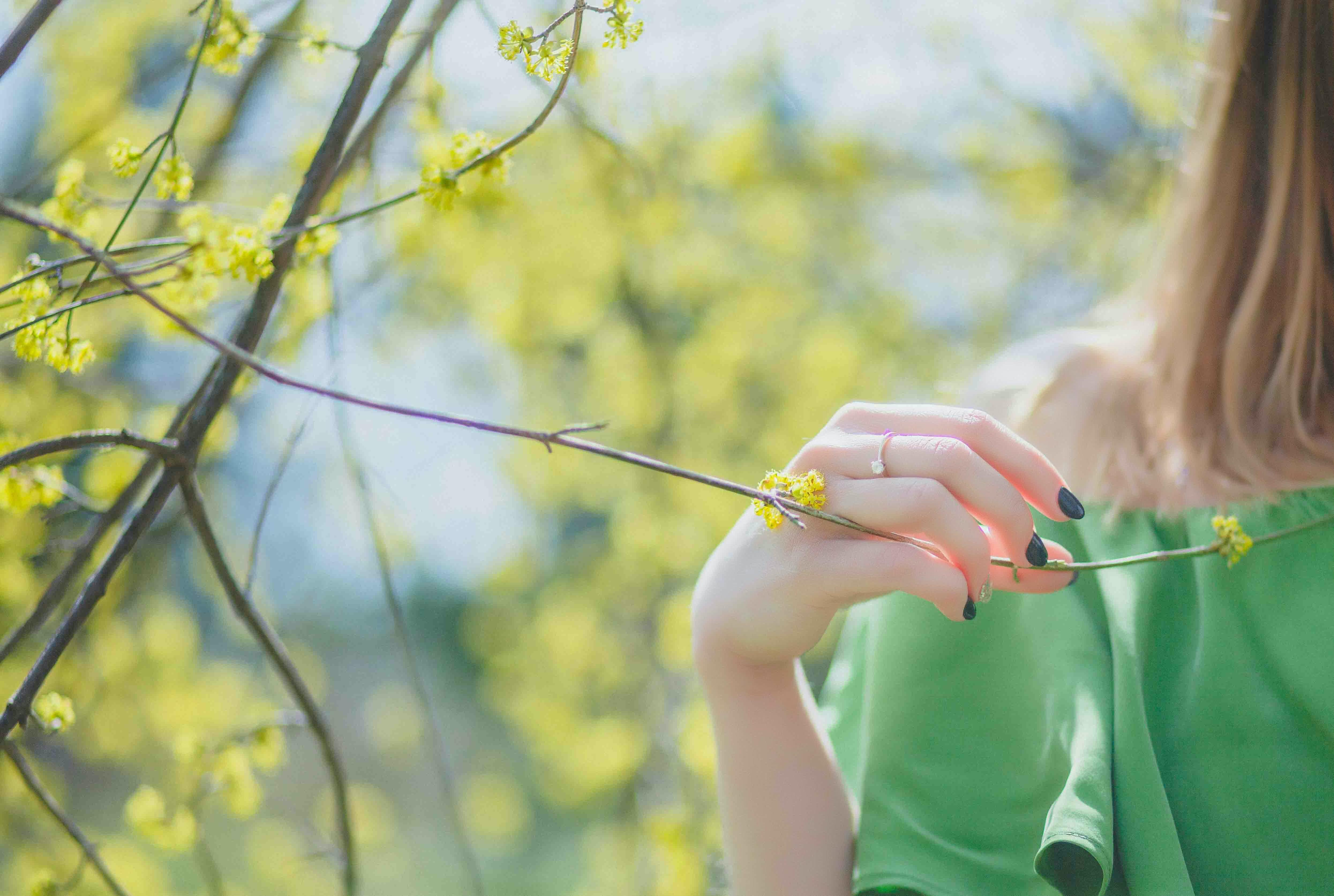Gratis lagerfoto af blomster, gren, gule blomster, hånd