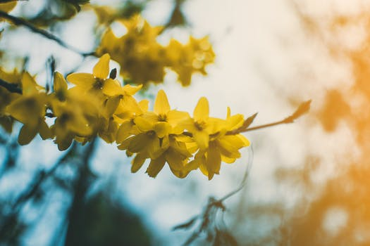 1000 beautiful yellow flowers photos pexels free stock photos shallow focus photography of yellow flowers mightylinksfo