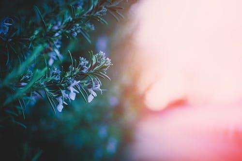 Kostenloses Stock Foto zu baum, blumen, farbe, verschwimmen