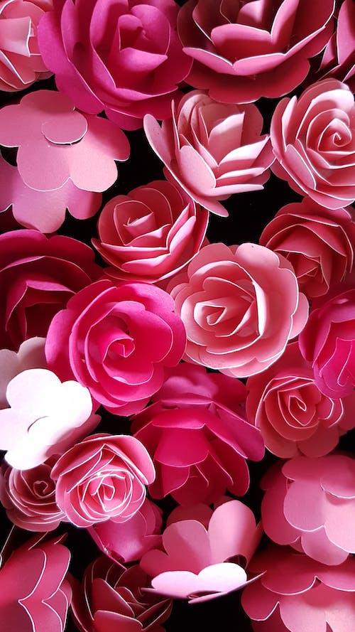 꽃이 피는, 꽃잎, 낭만적인, 디자인의 무료 스톡 사진