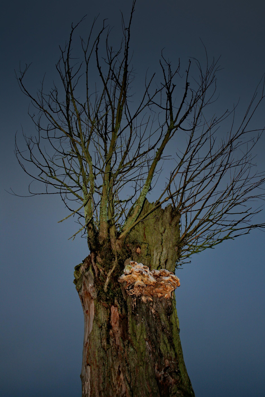 dark, lonely, tree