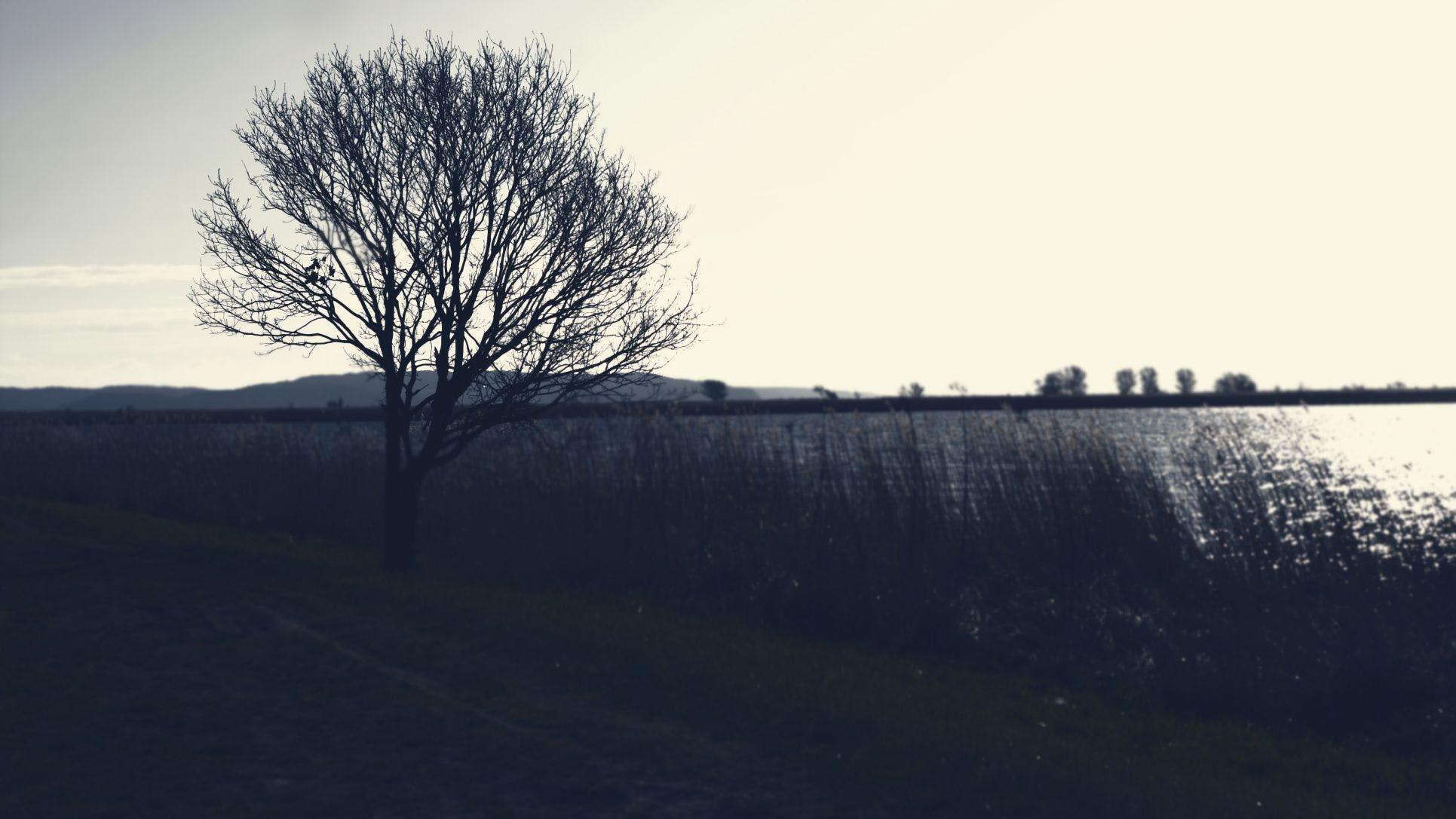 寂しい, 木, 杖, 水の無料の写真素材