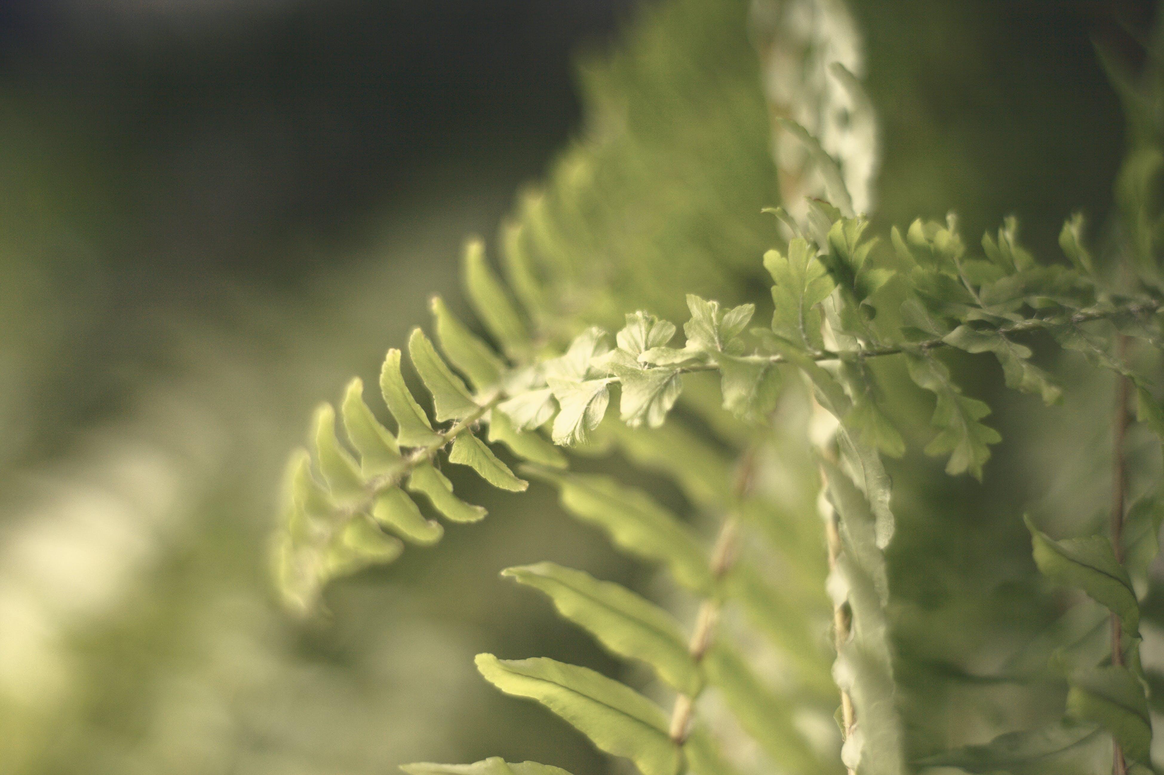 Gratis lagerfoto af Botanisk, bregne, bregneblade, close-up