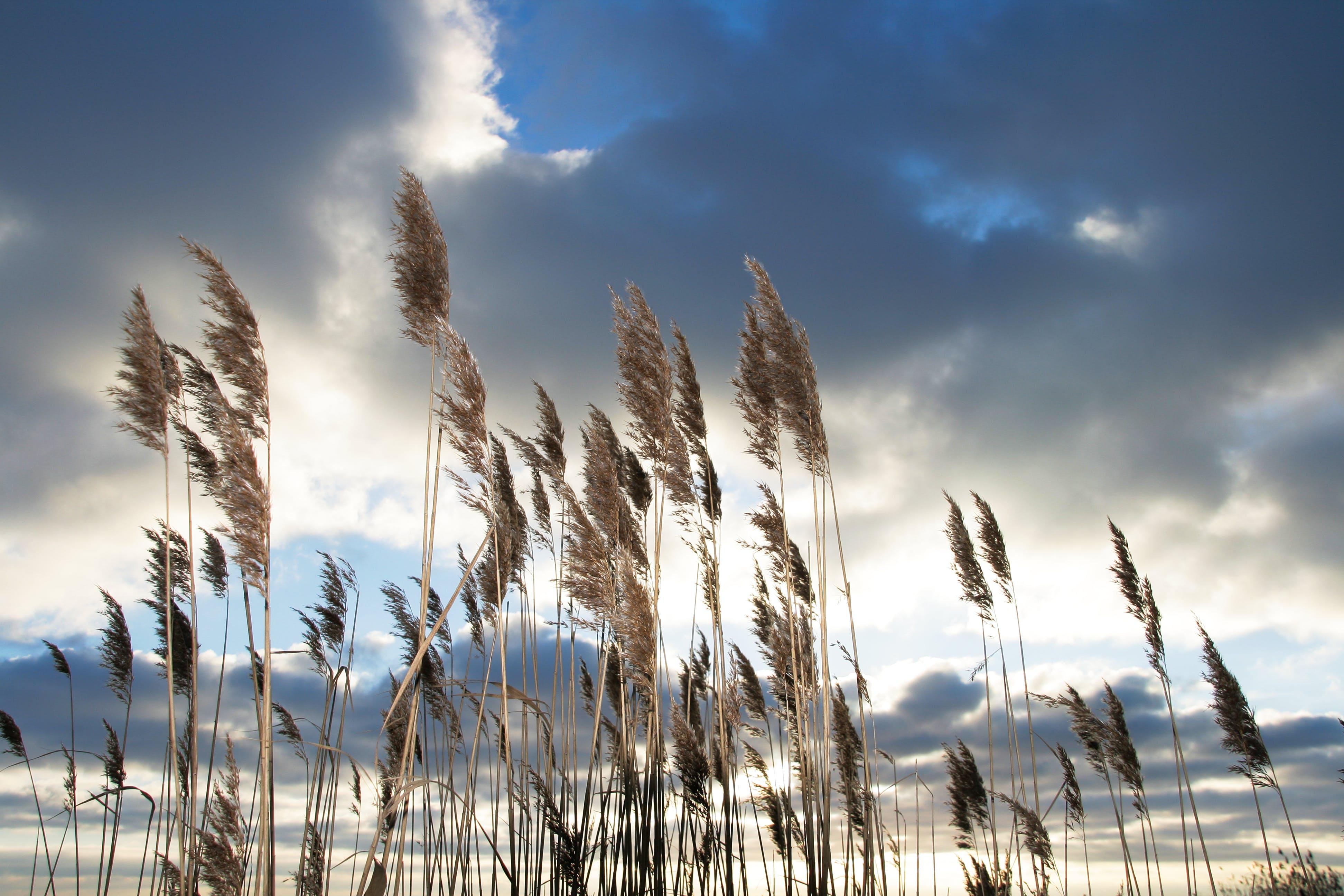 フィールド, 成長, 明るい, 草の無料の写真素材