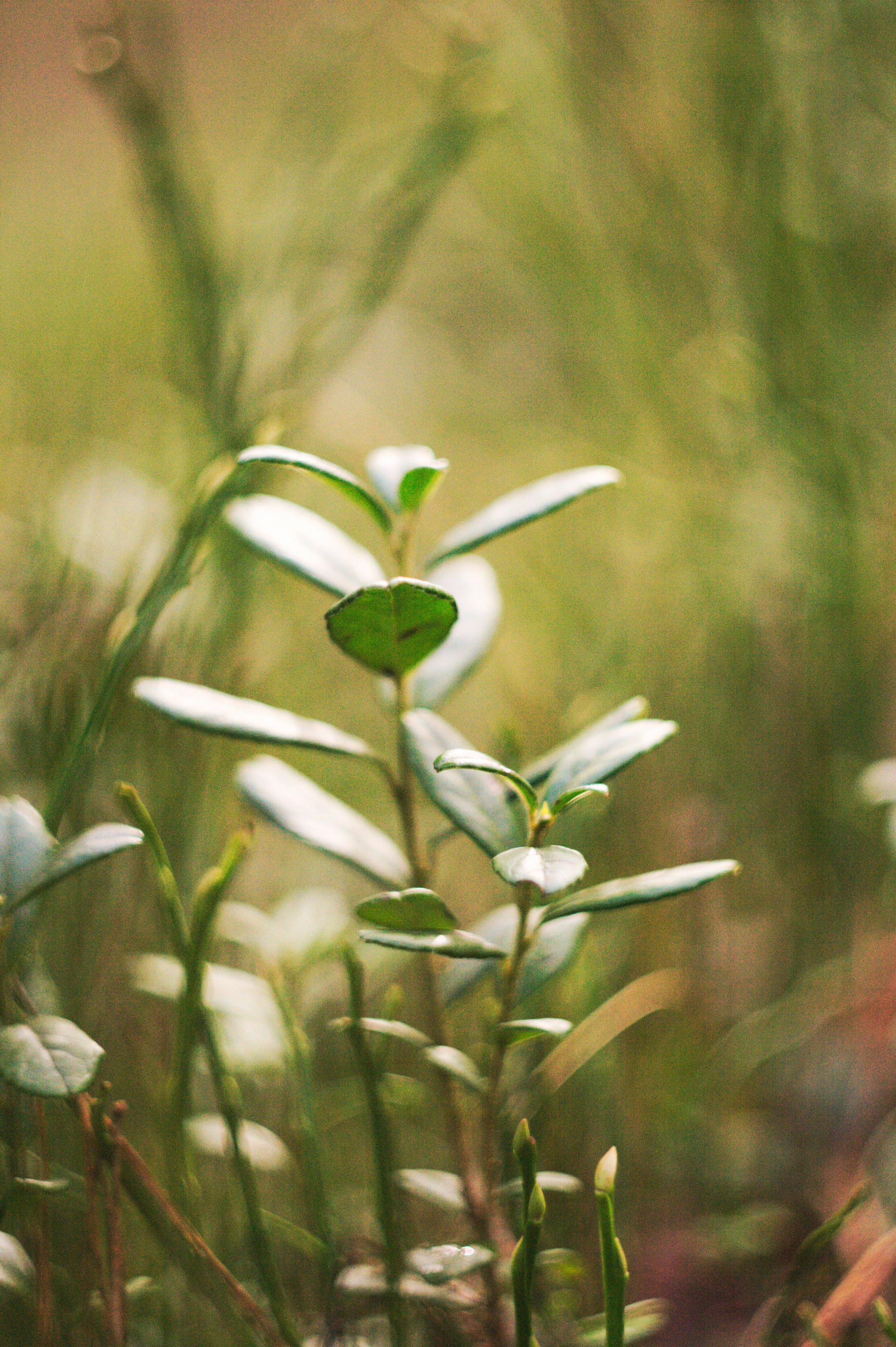 Free stock photo of blurry, grass, green