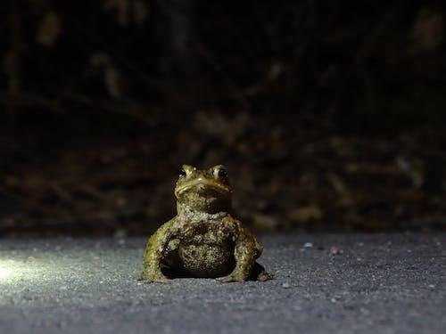 Darmowe zdjęcie z galerii z żaby