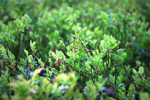 Foto d'estoc gratuïta de arbre, arbust, baia, branca