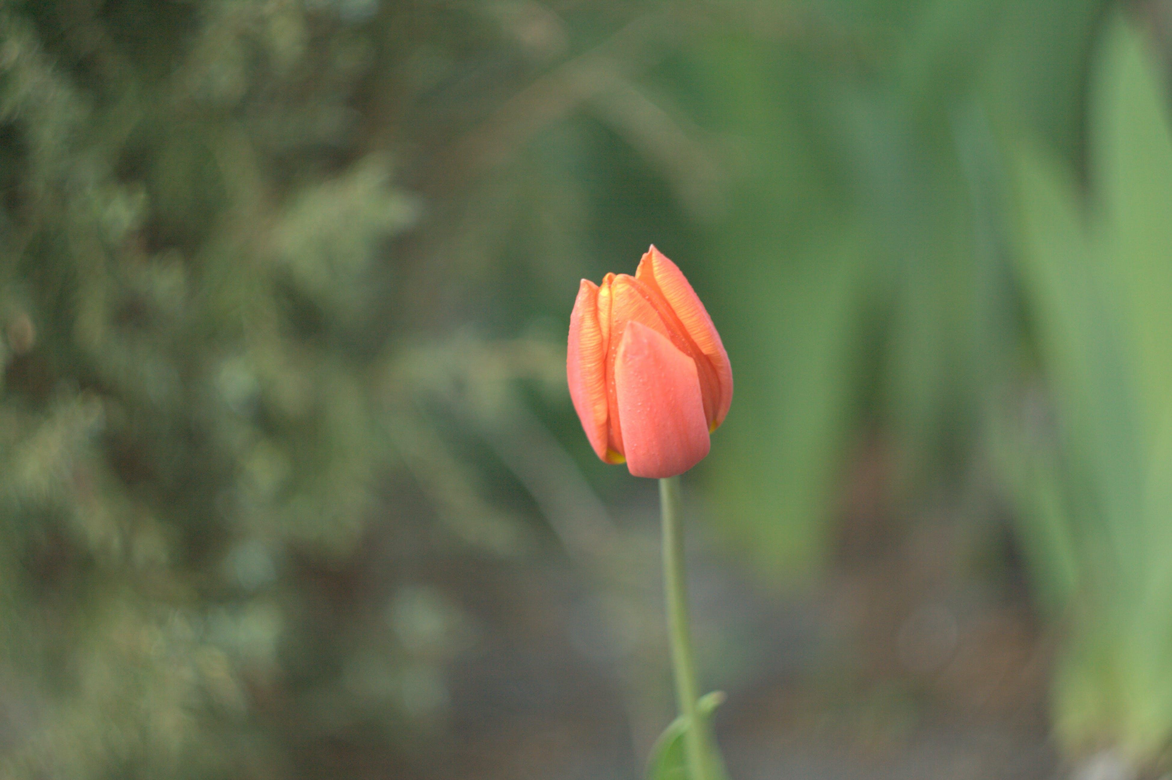 blume, farbe, flora