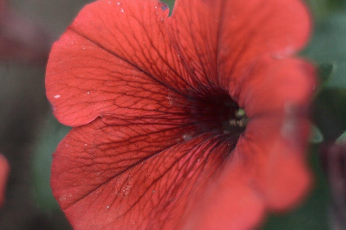 花, 赤, 閉じる
