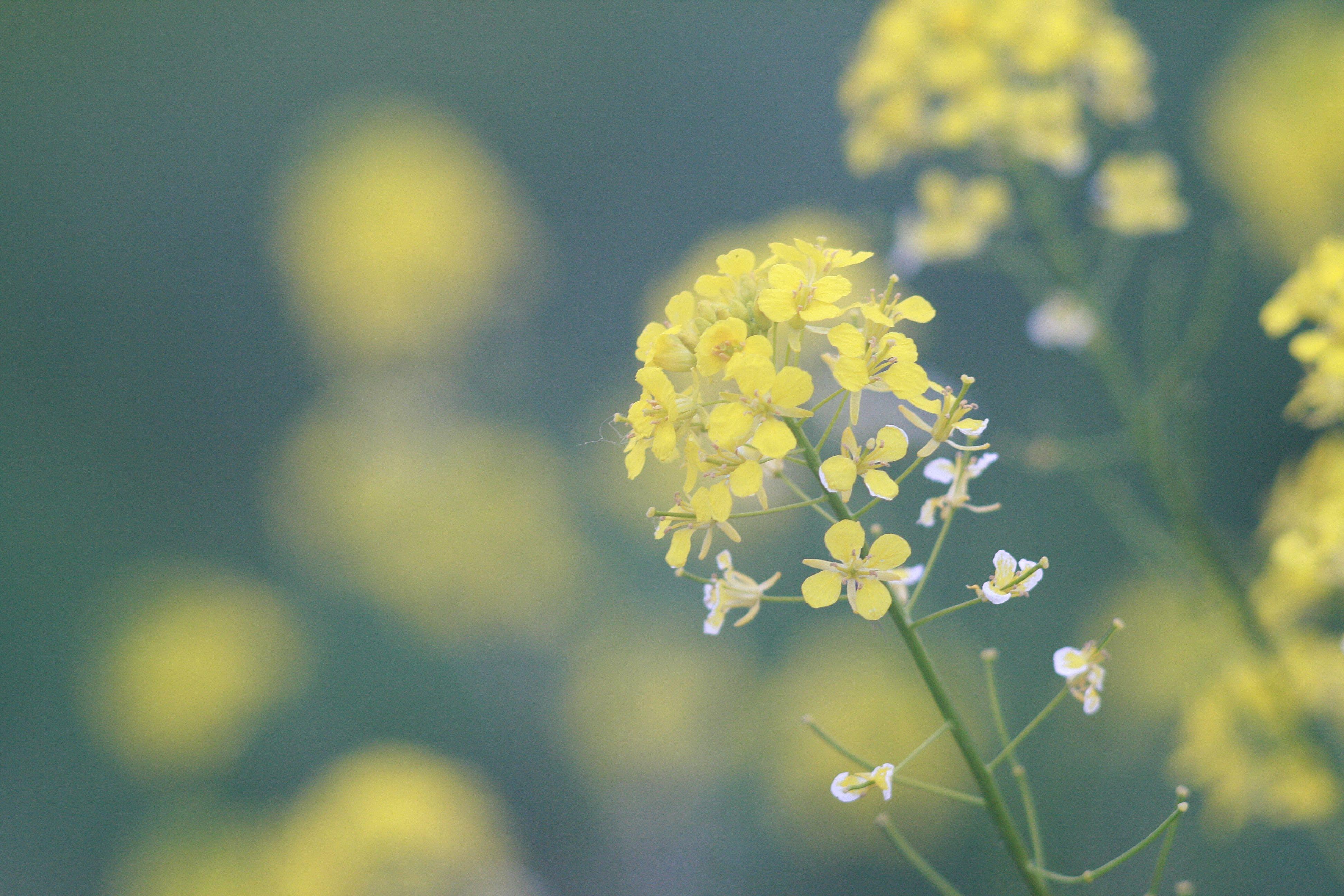 花, 黄色の無料の写真素材