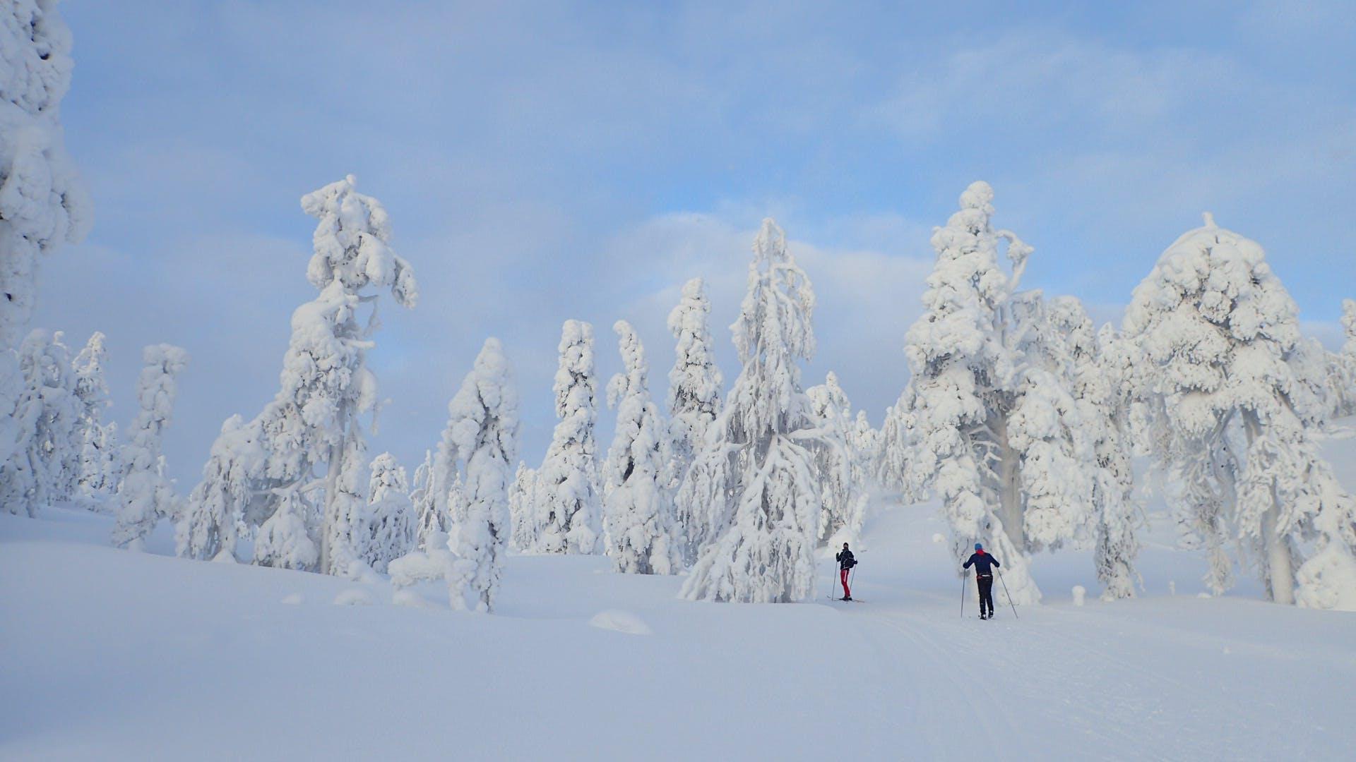Free stock photo of Finland, snow, winter, winter wonderland