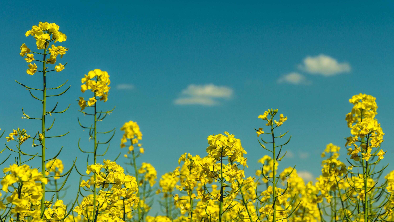 Gratis stockfoto met bloemen, fabrieken, flora, hemel