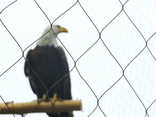 Free stock photo of eagle, freedom, nature