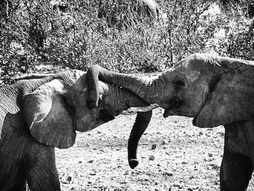 Fotos de stock gratuitas de amor, elefante