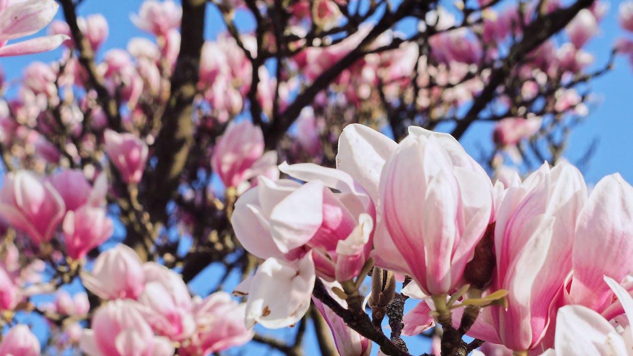 barva, flóra, jarní čas