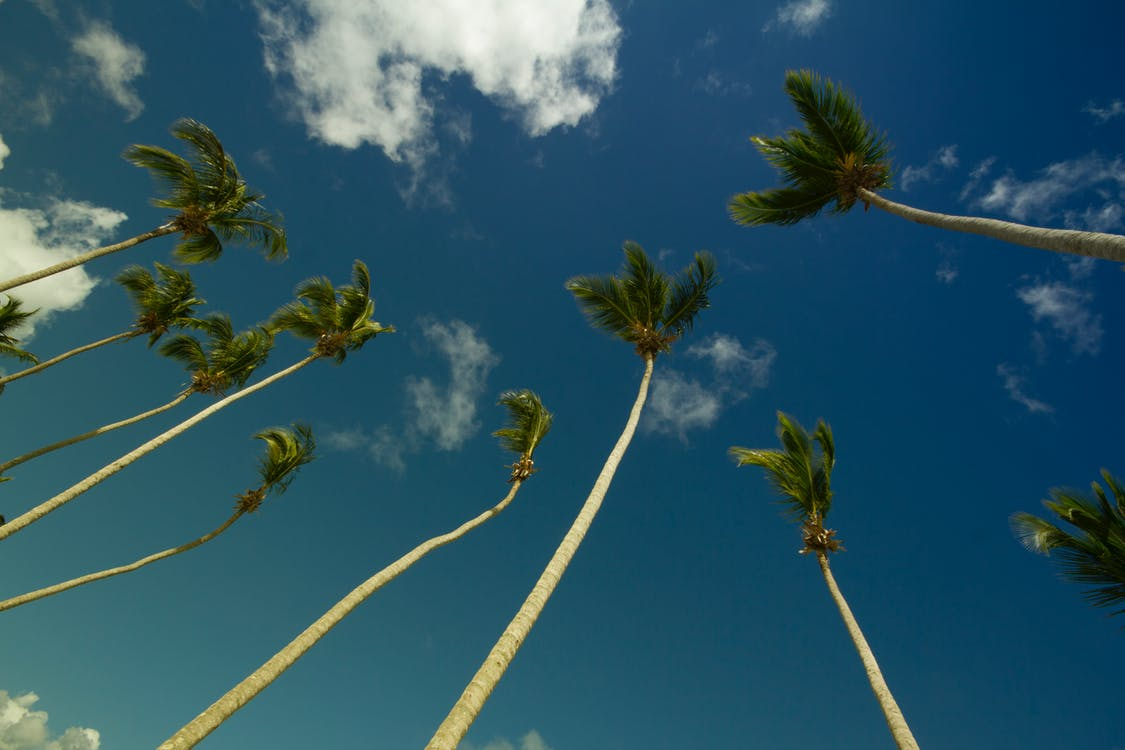 Coconut Trees Under Gray and Blue Cloudy Sky during Daytime