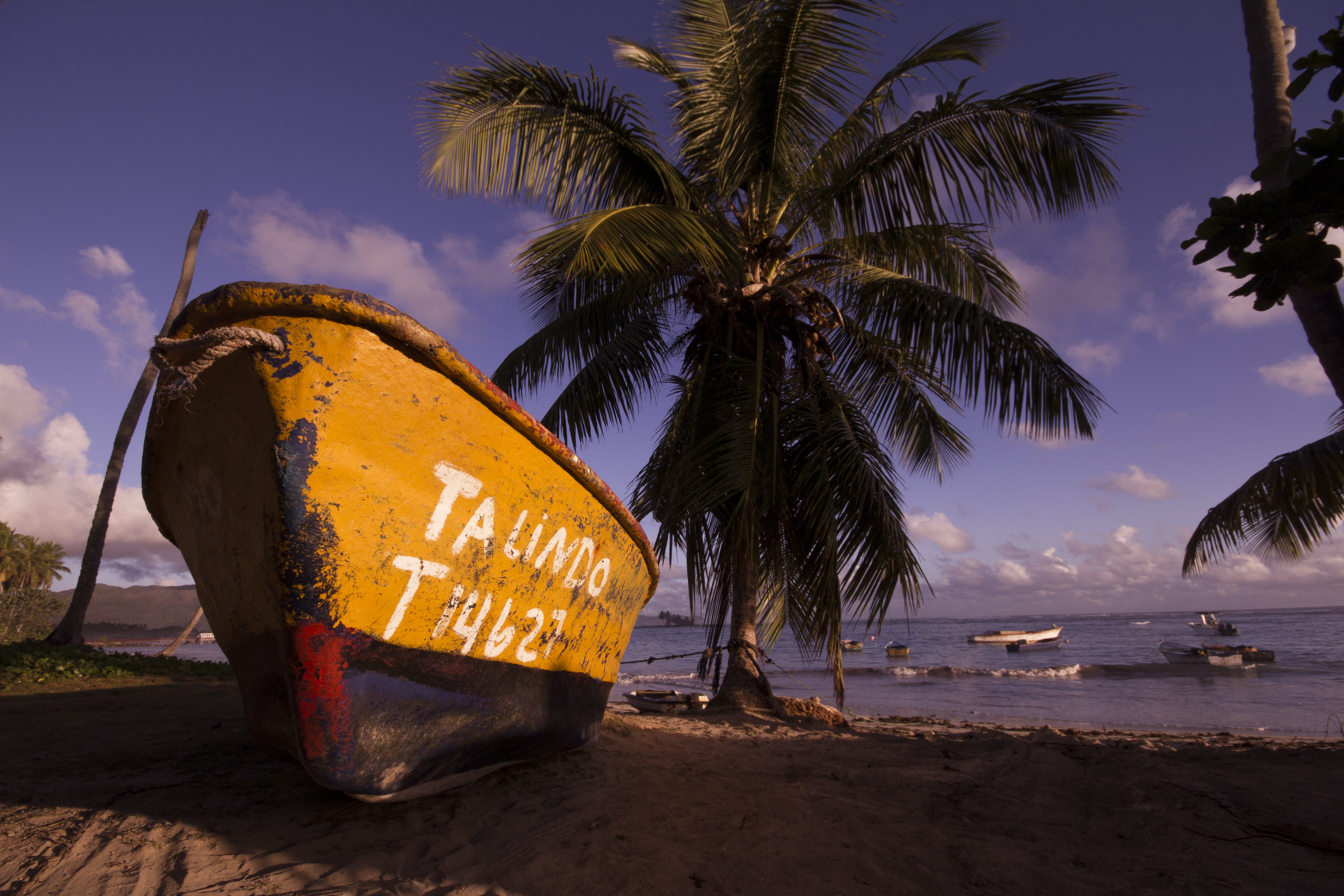 Brown and Black Boat on Shore Near Coconut Trees Under Blue Sky and Clouds