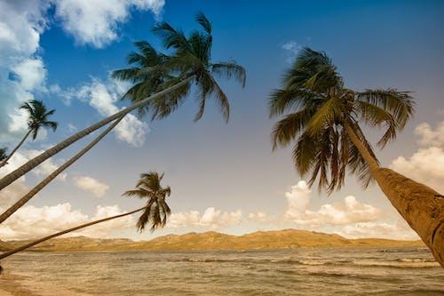 Fotobanka sbezplatnými fotkami na tému hory, kokosové orechy, more, morský breh
