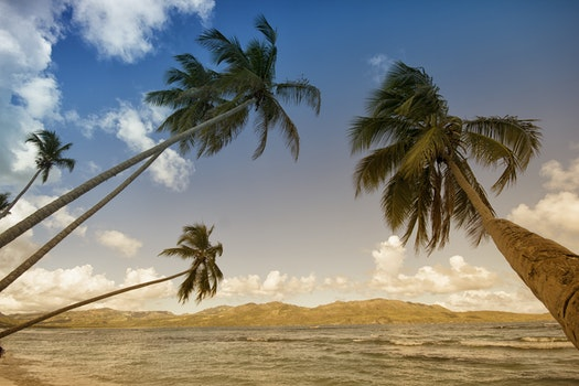 Coconut Trees in Sea Shore during Daytime