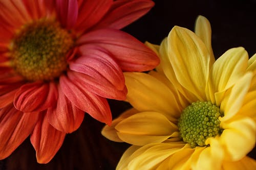 Fotobanka sbezplatnými fotkami na tému kvety
