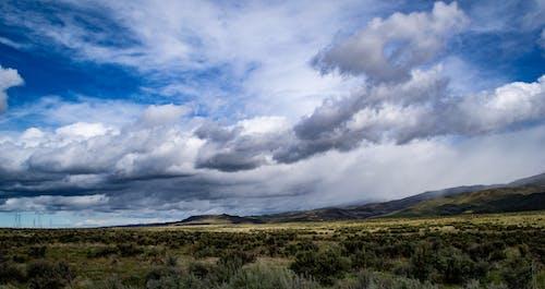 Foto d'estoc gratuïta de camp, camp d'herba, cel, cel blau