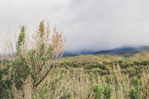 Ingyenes stockfotó ég, felhők, festői, fű témában
