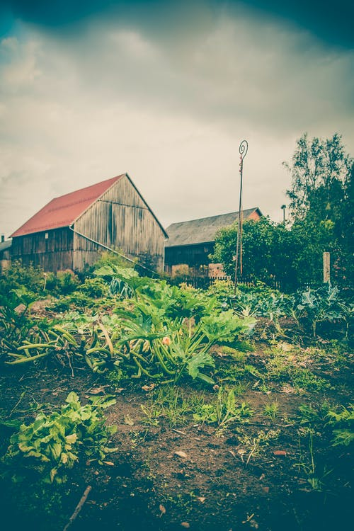 Free stock photo of countryside, garden, houses