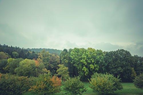 Бесплатное стоковое фото с деревья, небо, облака, облачный