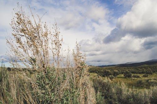 Foto d'estoc gratuïta de alba, camp, camp d'herba, cel blau