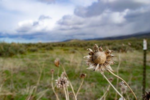 Základová fotografie zdarma na téma flóra, hřiště, krajina, kytka
