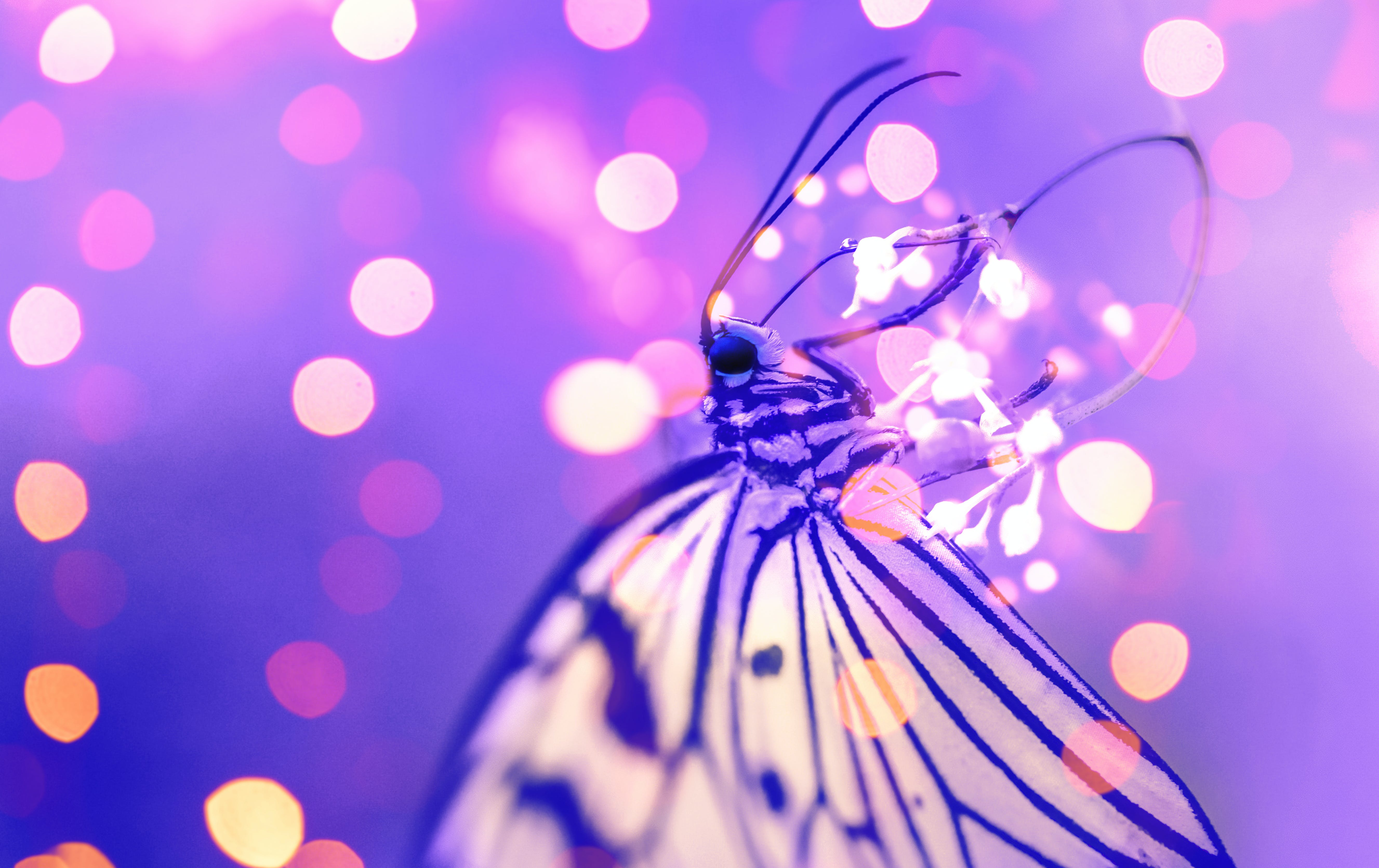 Macro Photography of Butterfly Near Lights