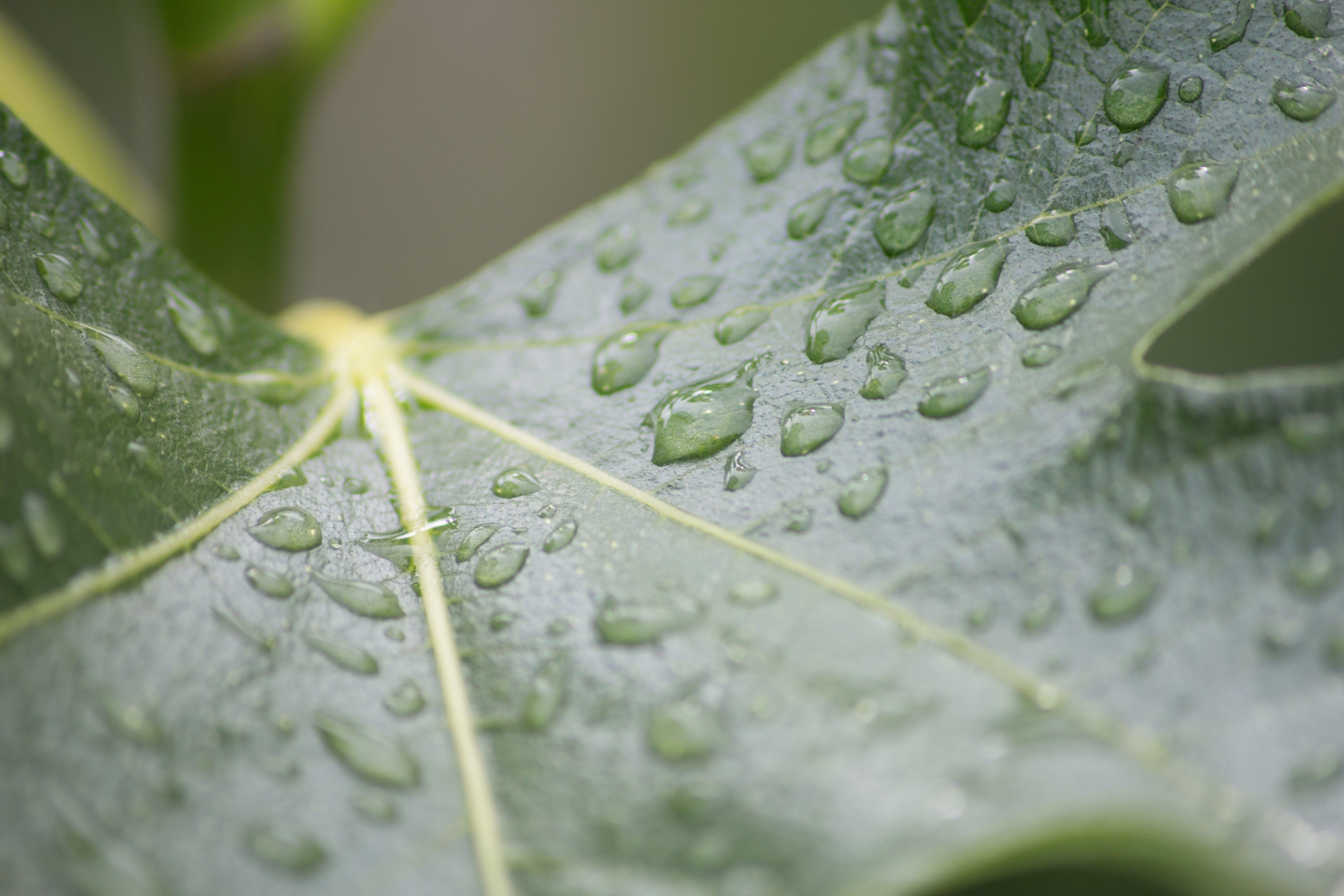 Free stock photo of closeup, drop, drop of water, green