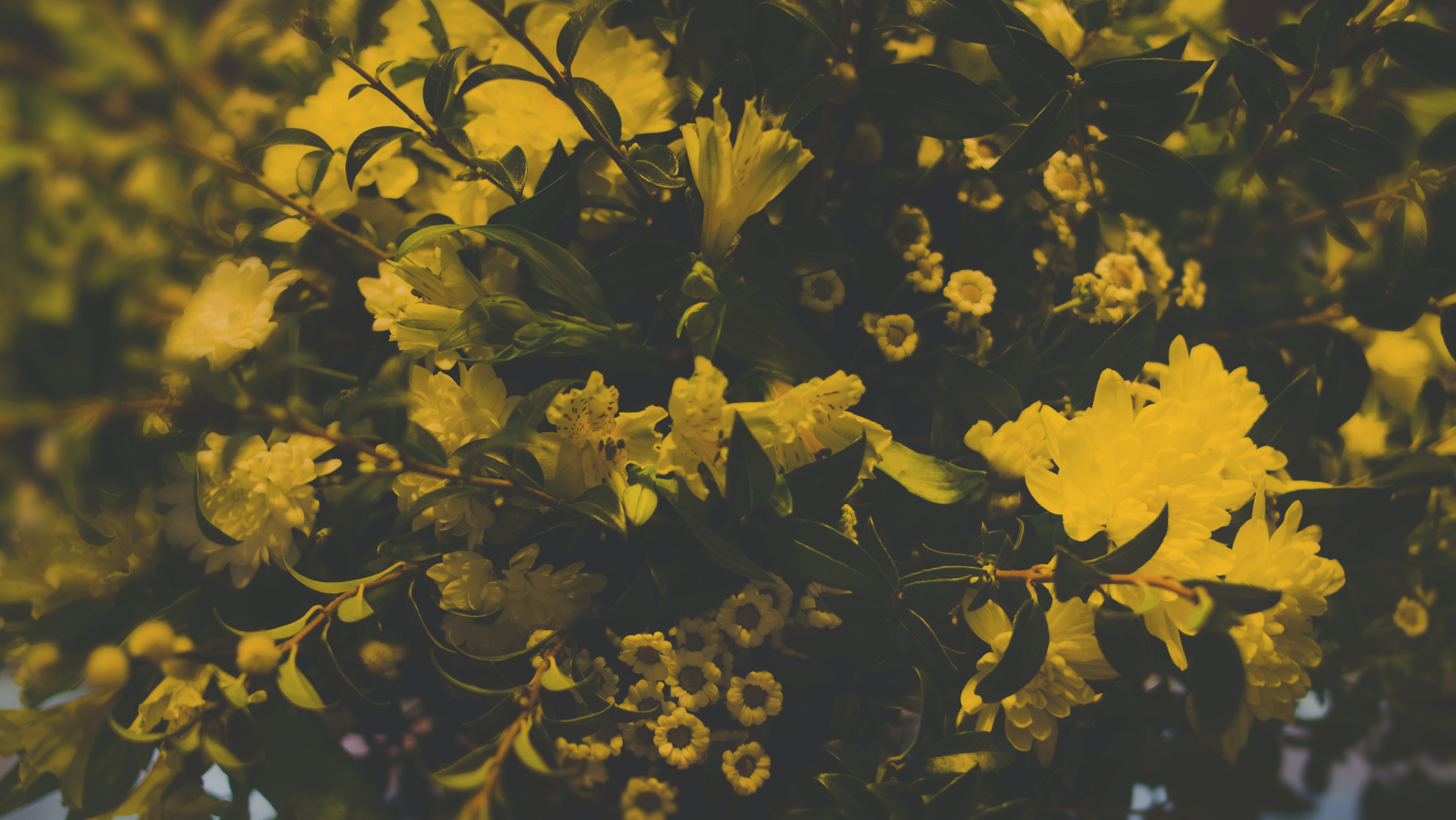Photography of Yellow Flowers