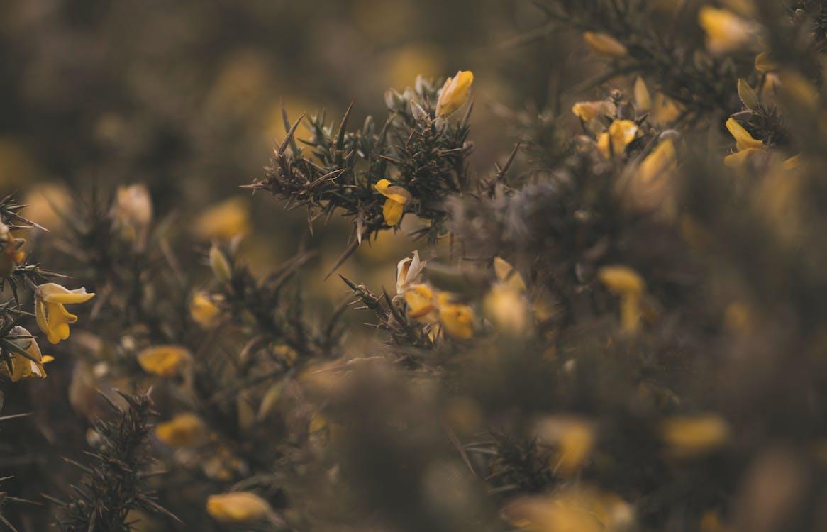 계절, 꽃, 꽃봉오리