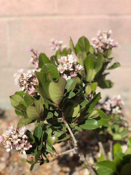 Free stock photo of close-up, daylight, flowers