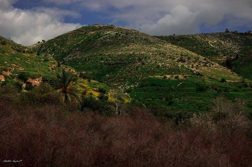 Gratis stockfoto met berg, evergreen, groen, groen veld