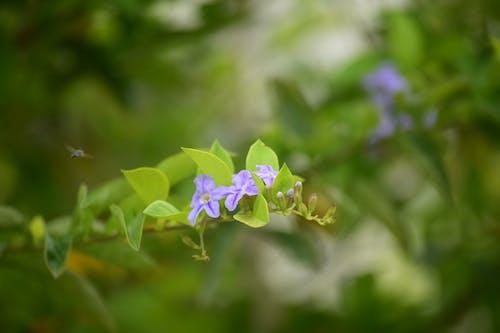 Imagine de stoc gratuită din creștere, estompare, fleure, floare