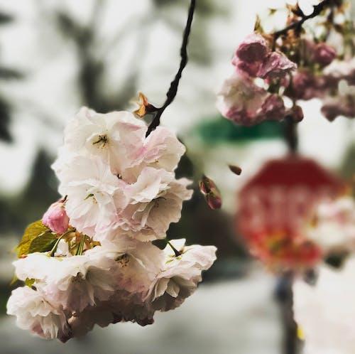 Fotobanka sbezplatnými fotkami na tému detailný záber, flóra, hĺbka ostrosti, jemný